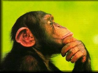 monkey_think
